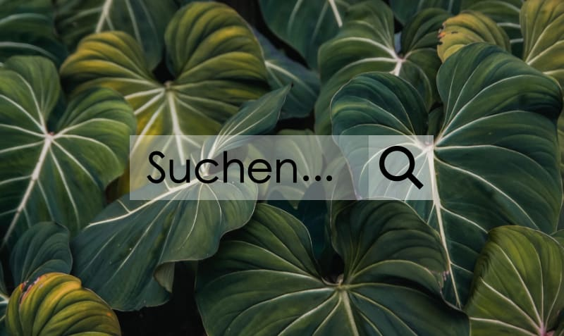 nachhaltige Suchmaschinen - Suchmaske mit Lupe, grüne Blätter im Hintergrund - Symbolbild