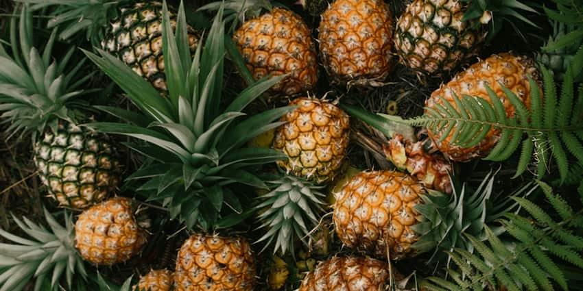 Pinatex: Leder aus Ananasblättern, Ananas