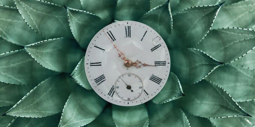 vegane Uhren - Uhr, grüne Pflanze im Hintergrund, Symbolbild