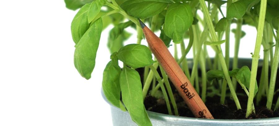 Sprout World Stift im Blumentopf (Basilikum)